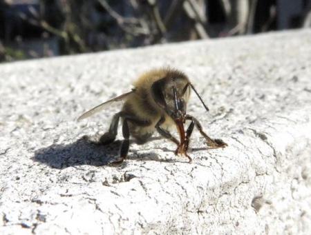 昆虫 013