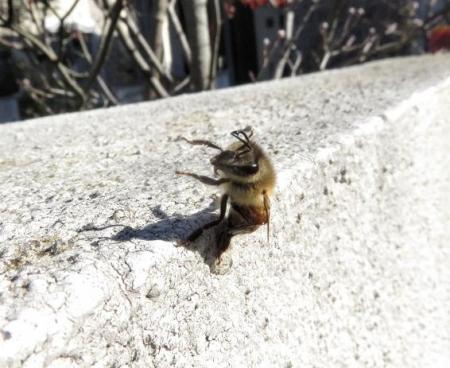 昆虫 006
