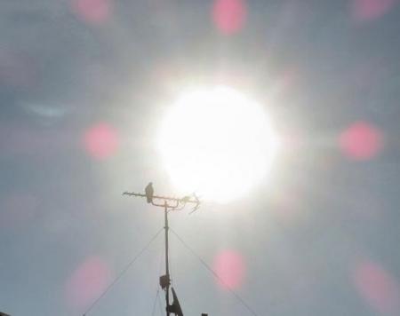 太陽鳩 001