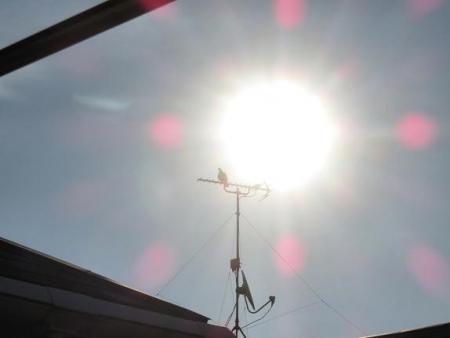 太陽鳩 004