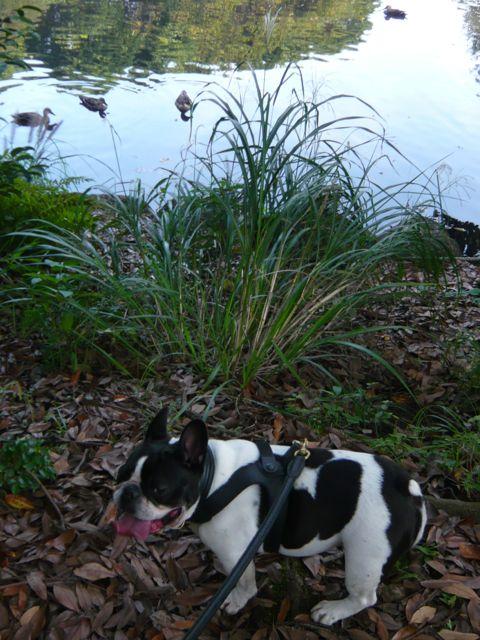池の周りは少し涼しい