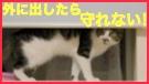 fc2-dassou3