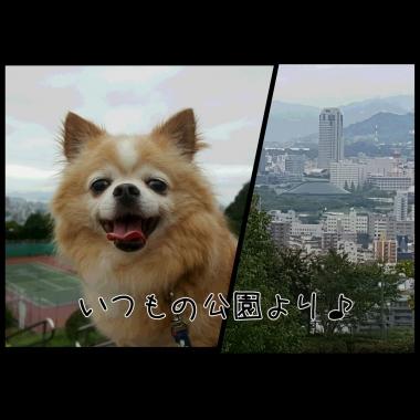 PhotoGrid_1442461030037.jpg