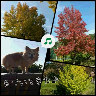 PhotoGrid_1445313147599.jpg