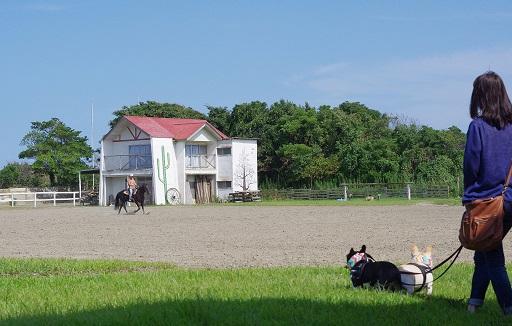 9-19ふるうた馬見学