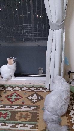 猫1509010002