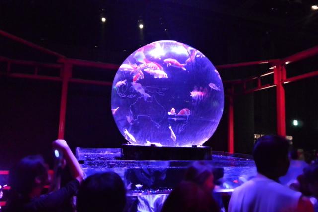 アートアクアリウム 2015 〜江戸・金魚の涼〜 (10)