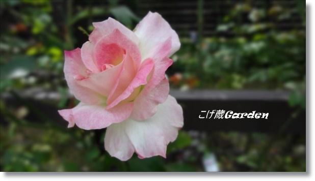 DSC07973_R.jpg