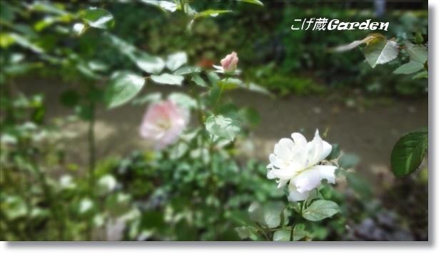 DSC07975_R.jpg