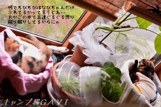 150910_5296.jpg