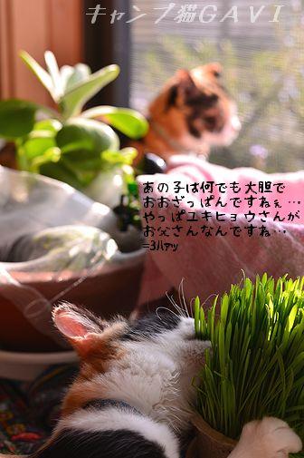 151020_6836.jpg