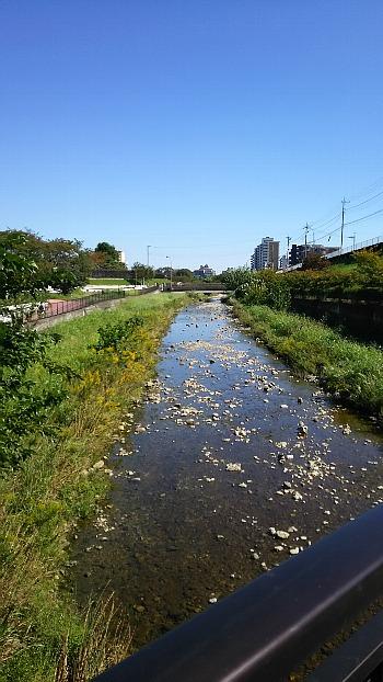 空堀川の秋