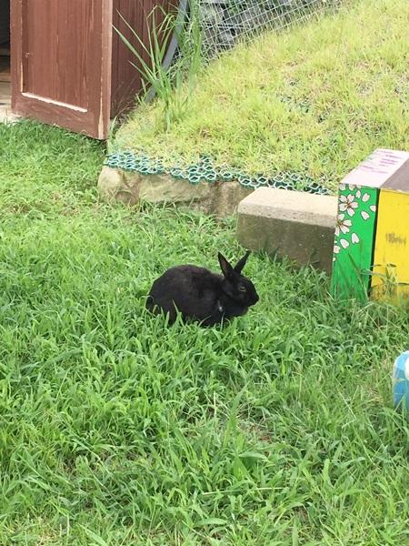 宇陀アニマルパーク ウサギ