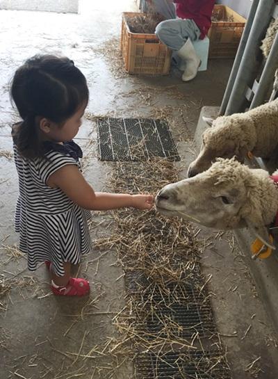 宇陀アニマルパーク 羊餌やり