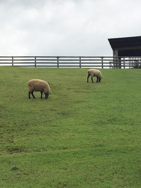宇陀アニマルパーク 羊牧草