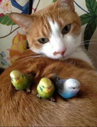 あの?そこで卵温めるのやめてもらえます?