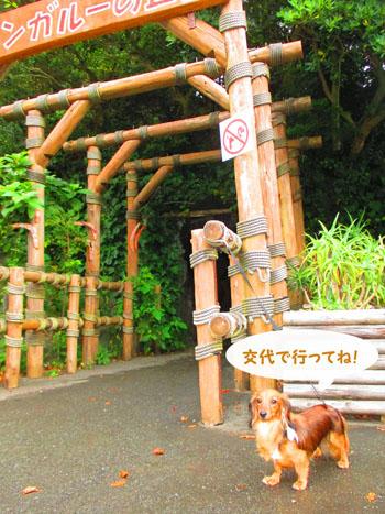 2015-08-izu24.jpg