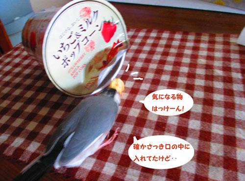 2015-09-omamori1.jpg