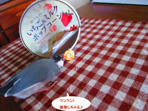 2015-09-omamori2.jpg
