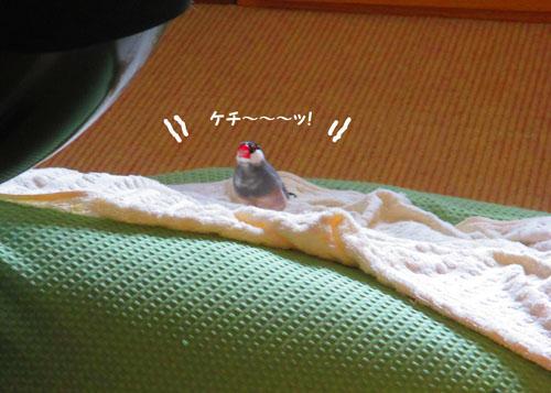 2015-09-omamori4.jpg