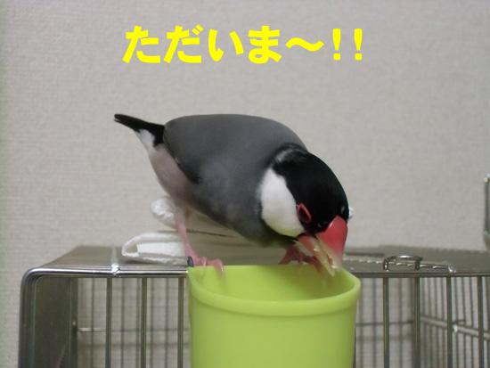 ただいま~!!