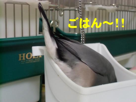 ごはん~!!