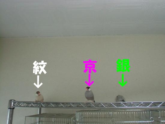 3羽同時放鳥