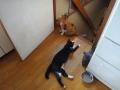 愛猫達:2015.7.24