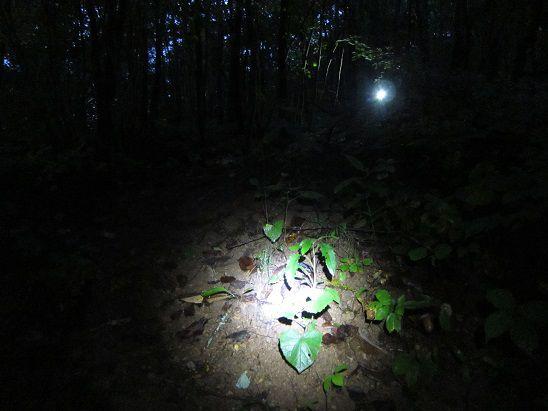 夜明け前の松茸狩り