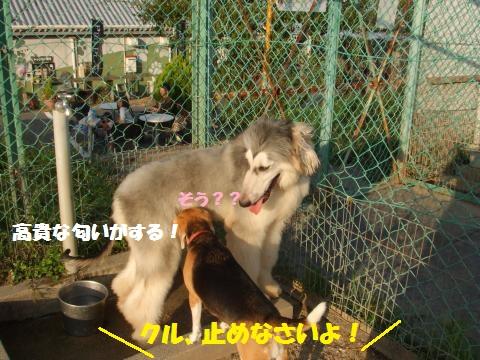 037_convert_20151005011106.jpg