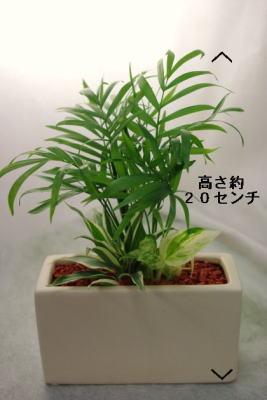 ミニミニ観葉植物