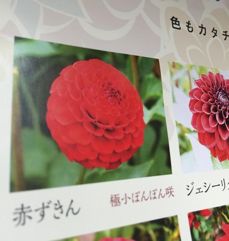 山形県で有名なのです。