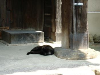 151010_寺で昼寝する猫