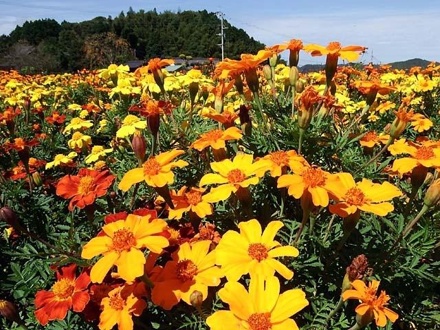 花壇の花(113976 byte)