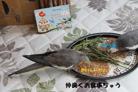 外食ちゅうの二人(羽)