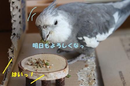 おまかせを!
