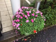 優っくり村_090815_1