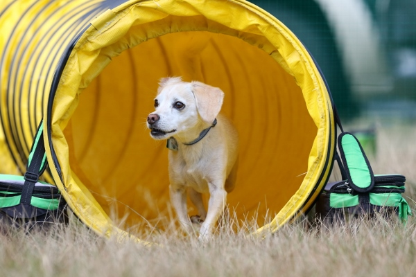 LM6A3755_Inter Small Dog Camera One (600x400)
