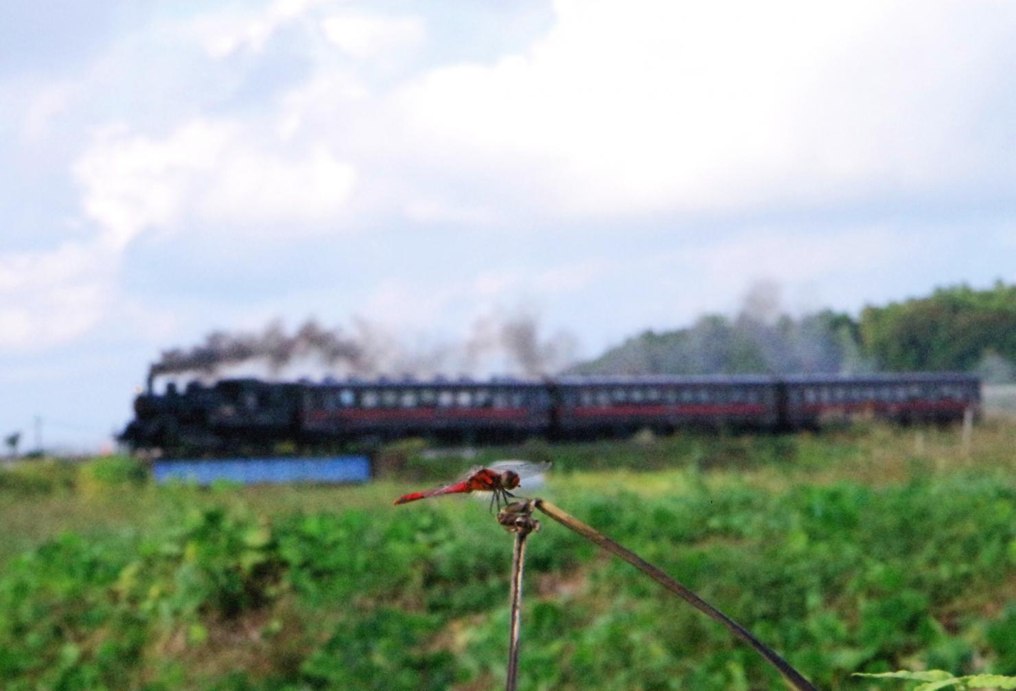 151017red-dragonfly.jpg