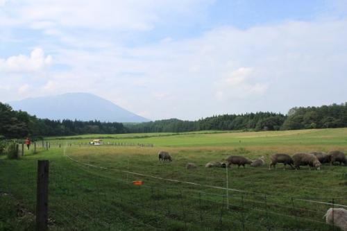 小岩井農場⑥