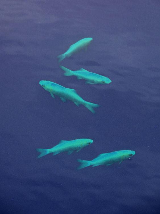 140913金魚2
