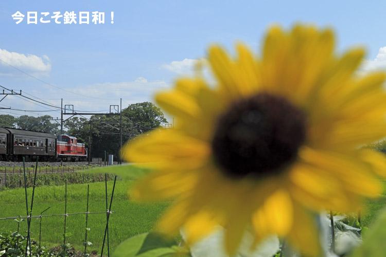 _MG30219.jpg