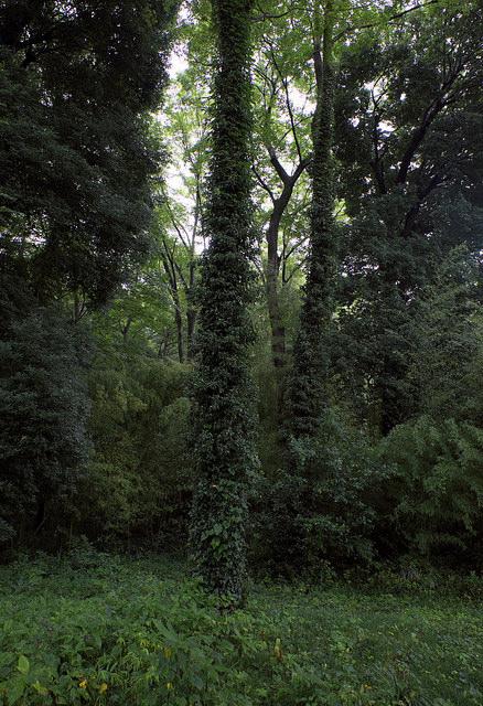 再建樹木派014不明