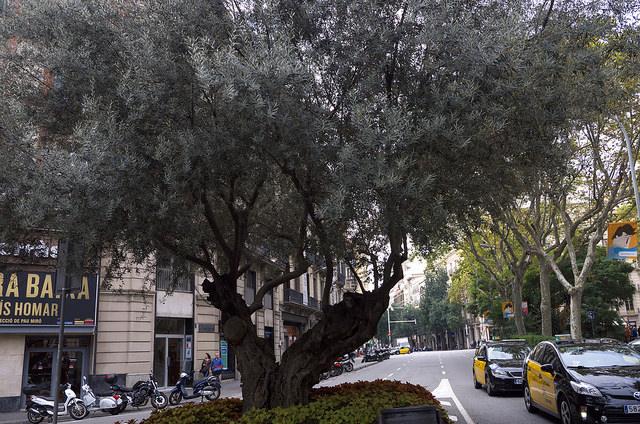 バルセロナ012