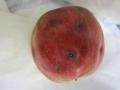 りんごp2
