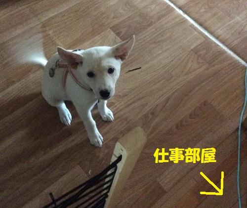 忠犬テンテン