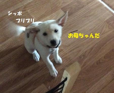 IMG_0391 (2)