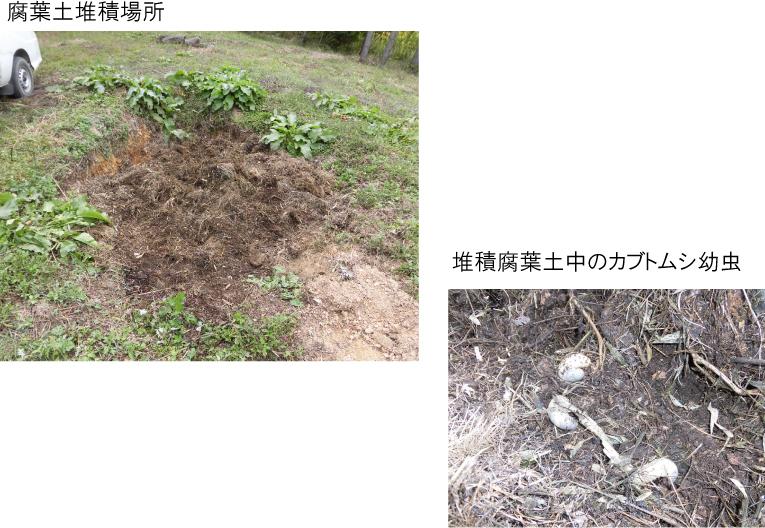 CIMG1021-151013kabutomushi.jpg
