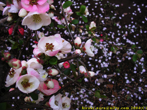 DATA04014_散るモノと咲くモノ