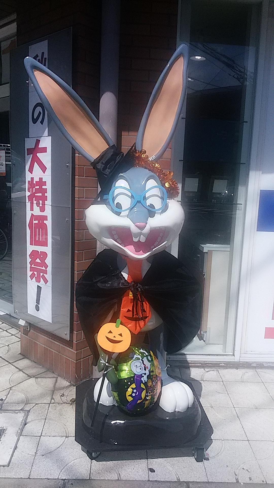 ウサギ写真 古屋